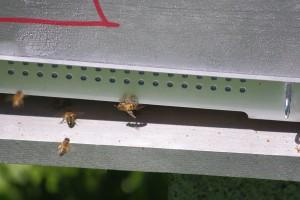 abeilles2