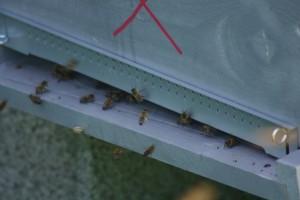 abeilles7